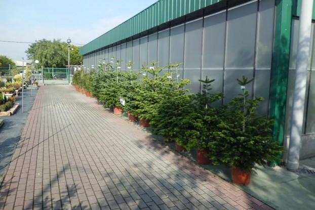 Rbol de navidad garden center catalunya plants de for Jardineria barcelona centro
