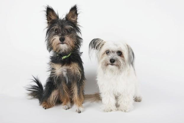 como-evitar-enredos-pelo-de-los-perros