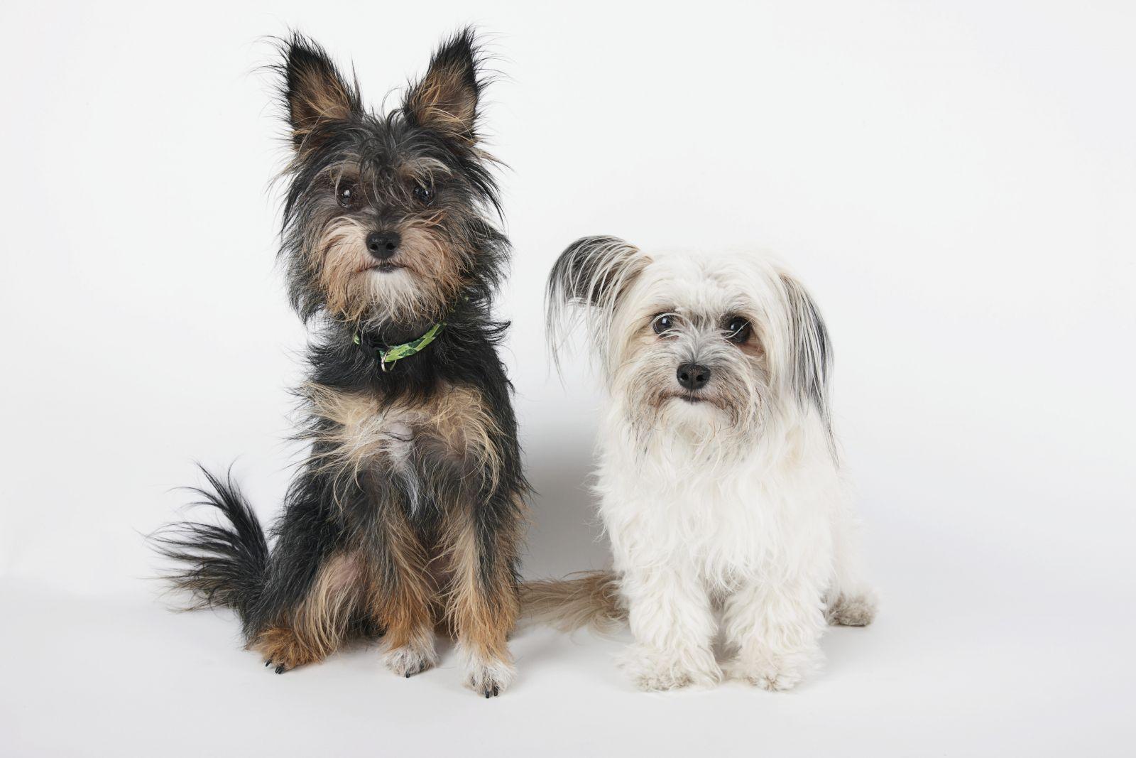 Cómo evitar los enredos del pelo de tu perro.
