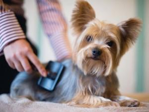 como-evitar-enredos-pelo-perros