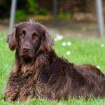 Cómo evitar los enredos del pelo de tu perro
