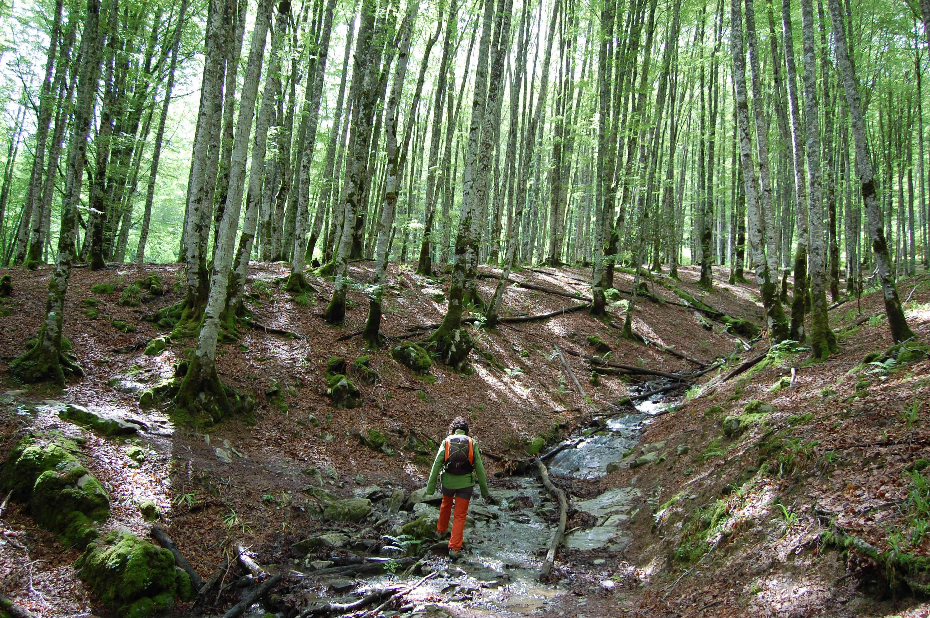 La Selva de Irati: Los colores del Otoño.