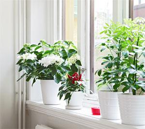 la-luz-y-las-plantas-de-interior