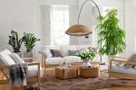 plantas-de-interior-cuidados