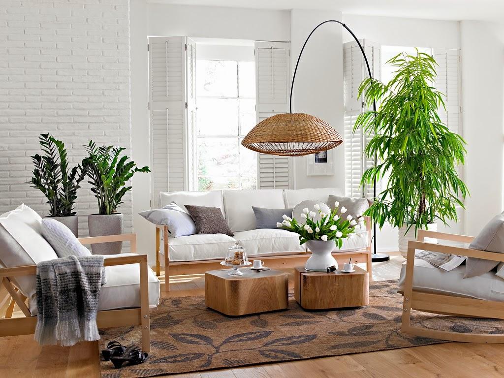 El cuidado de las plantas de interior (parte II): La temperatura y la luz.