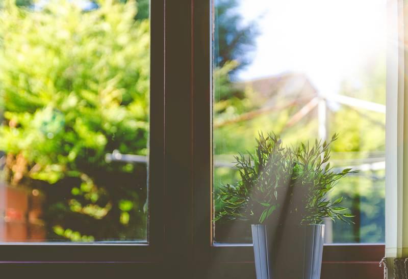 La importancia de la temperatura y la luz en el cuidado de las plantas de interior
