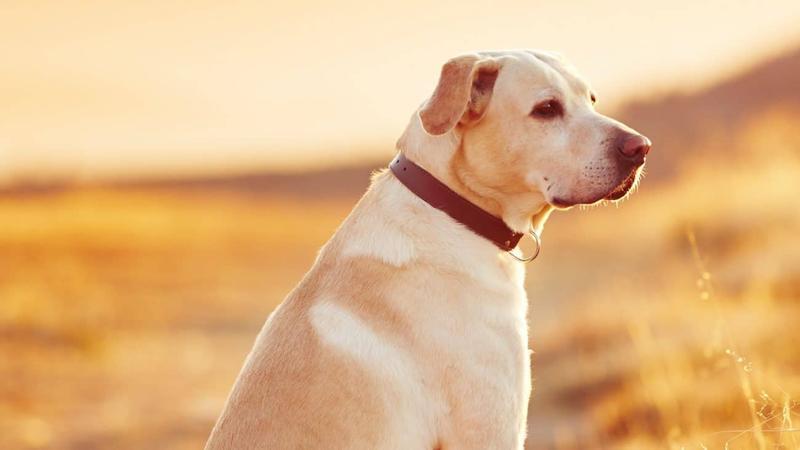Cómo prevenir y eliminar las plagas de pulgas de tu mascota