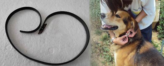 collar-anti-pulgas-para-perros