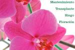 curso-gratuito-orquideas-barcelona-garden-catalunya-plants