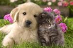 perro-gato-juntos