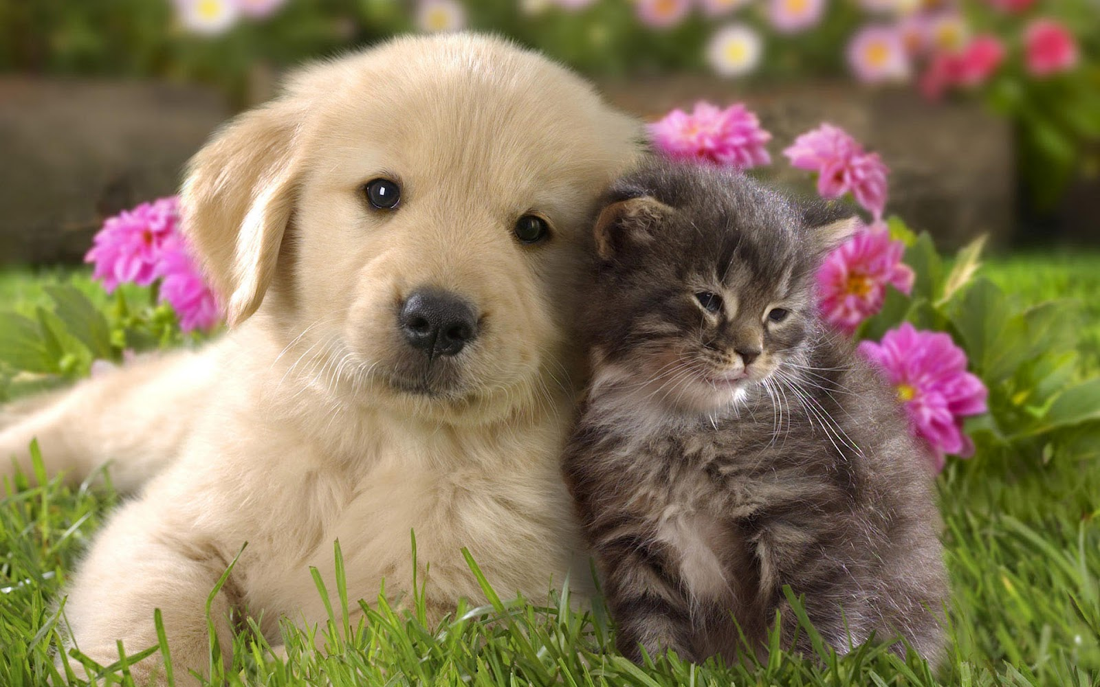 Cómo prevenir y eliminar las plagas de pulgas de su mascota.