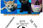 cartell-gats-adopcio