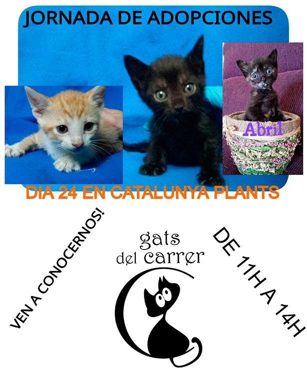 Jornada de adopciones de gatos (día 24 de mayo). ¡Ven a conocernos!