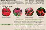 agenda-huertoi-jardin-junio-2015