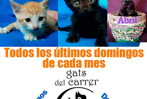cartel-adopcion-gatos