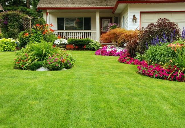 jardin-verano-plantas