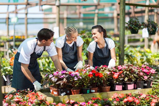 oferta-variada-en-centros-de-jardineria