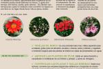 agenda-terraza-jardin-mes-julio-2015