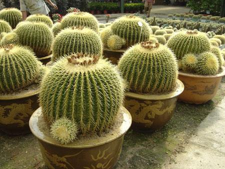 Planta del mes de Julio: Cactus y Plantas Crasas con un 10% de descuento.