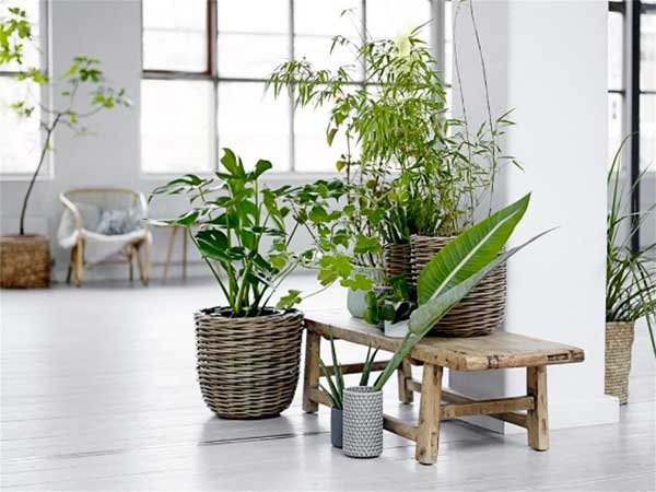 Ideas para decorar tu hogar con plantas garden for Decoracion con plantas