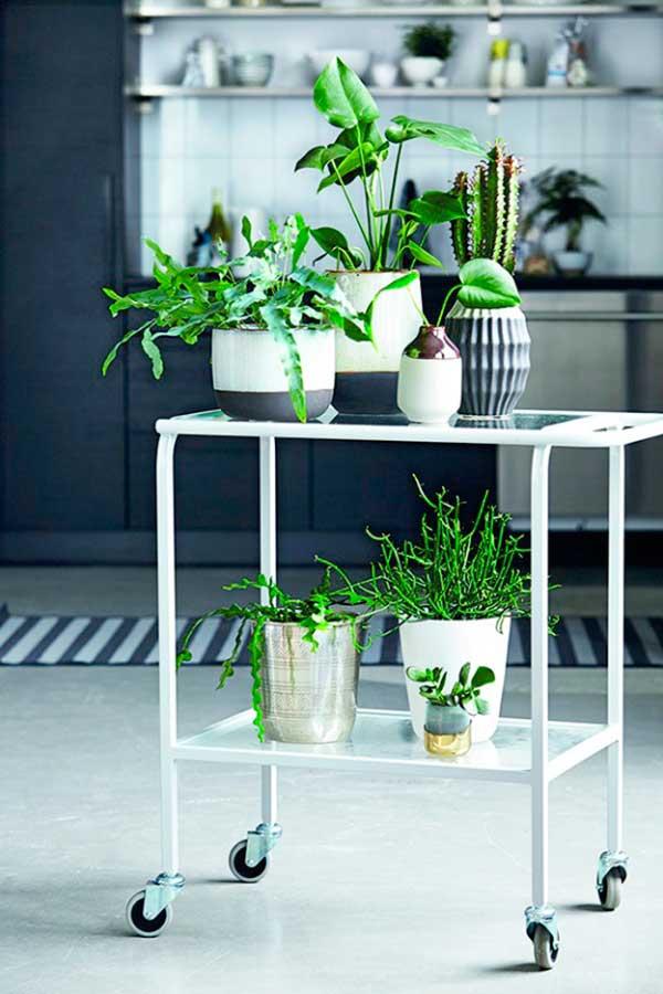 decorar-con-plantas-2
