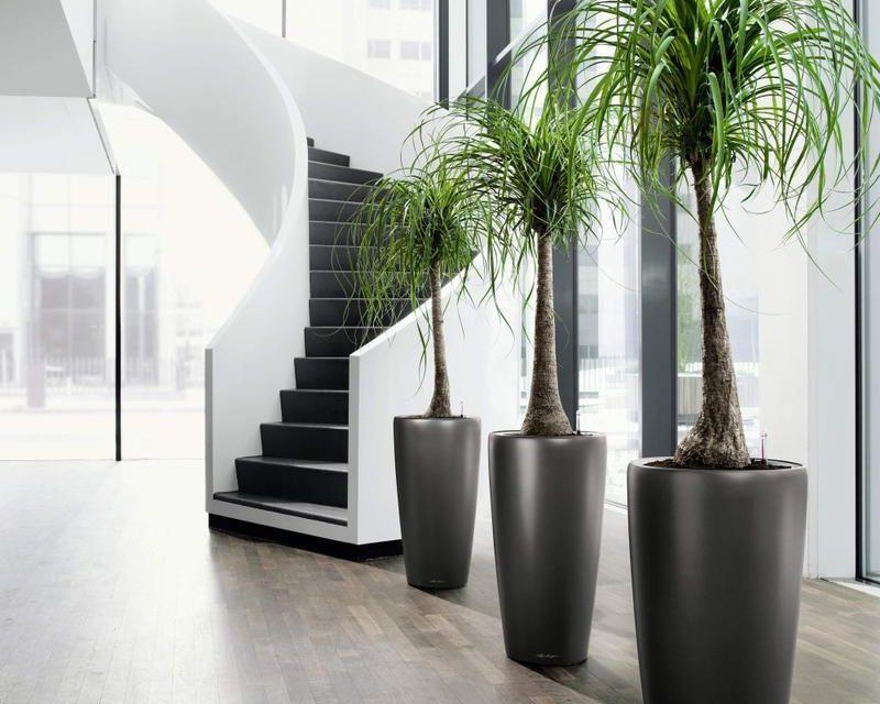 Ideas para decorar tu hogar y la oficina con plantas