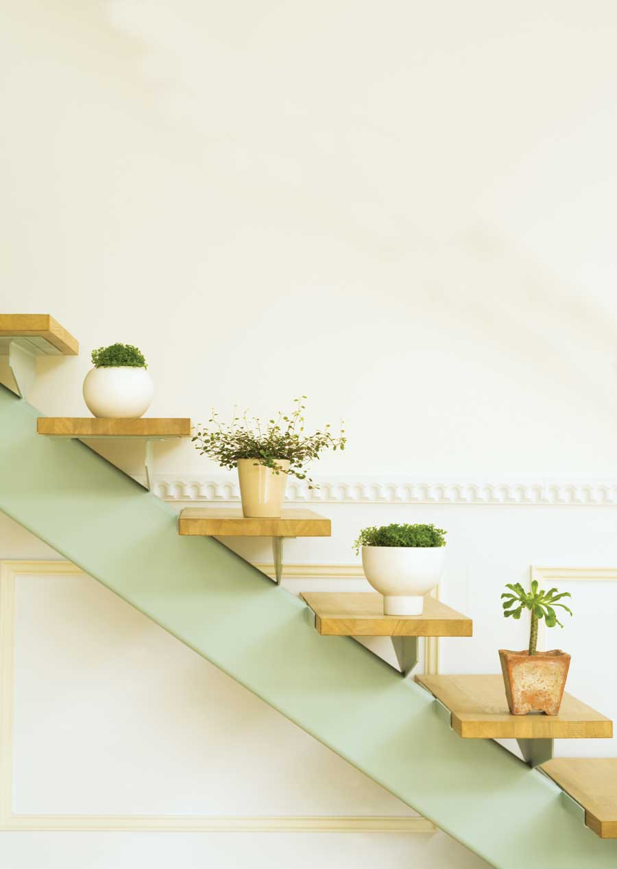 Ideas para decorar tu hogar con plantas.