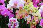 orquideas - planta del mes