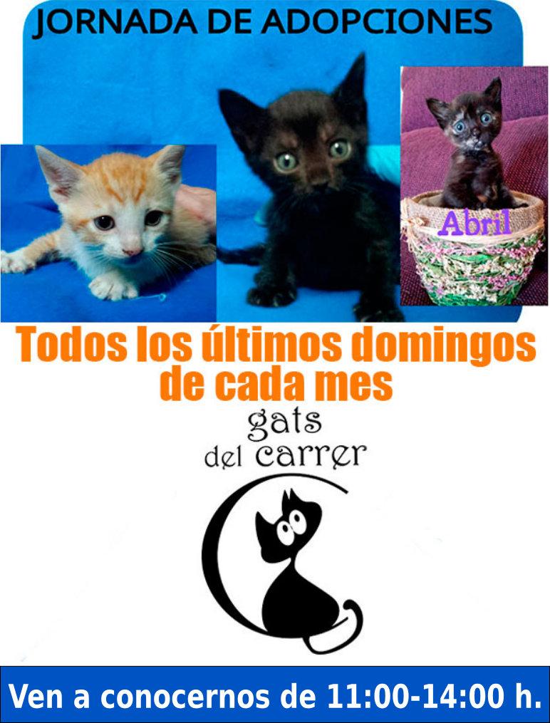 Jornada de adopciones de gatos (domingo 27 de diciembre). ¡Tú puedes ayudarle!