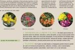 agenda-huerto-jardin-enero-2016