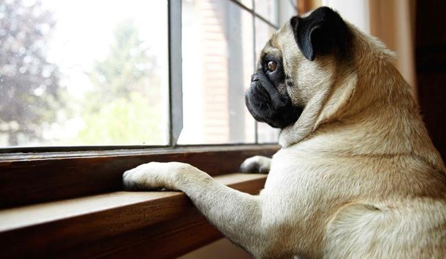perros-en-pisos-pequenos