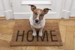perros-en-viviendas-pequenas