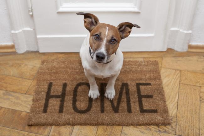 Consejos para tener perros en viviendas pequeñas.