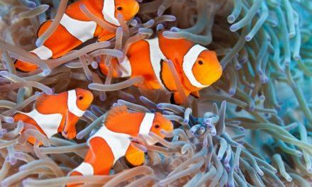Cuidados básicos de peces de acuario (Parte 1): Peces de agua salada.
