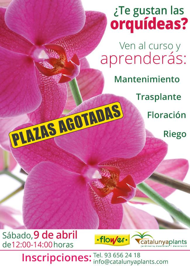 ¿Te gustan las orquídeas? Apúntate a nuestro curso gratuito.
