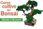 curso-bonsai-junio-2016