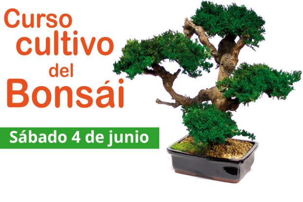 curso-bonsai-junio-2016