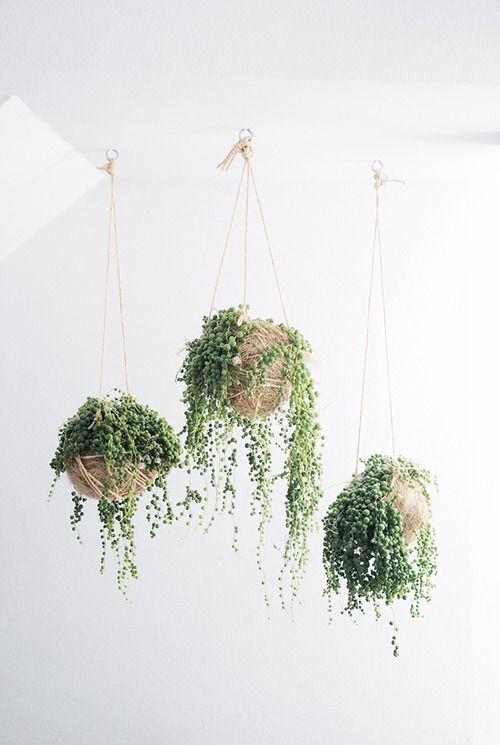 idees-decorar-amb-plantes-penjants