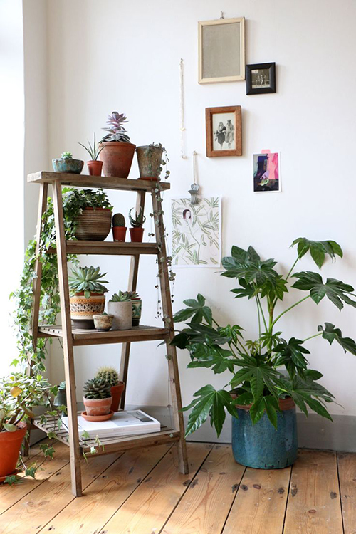 ideas-decorar-con-plantas-hogar