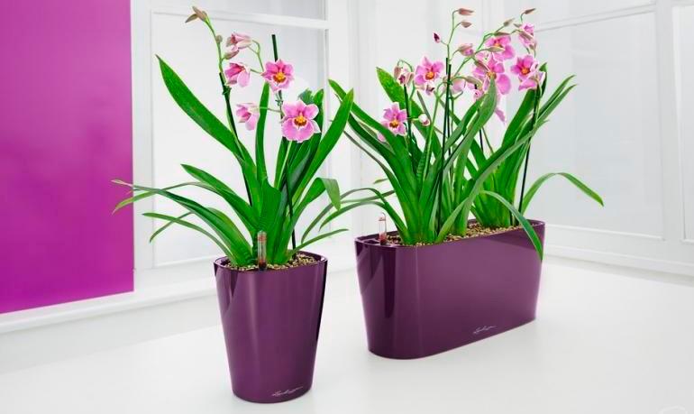 Las 5 claves para el cultivo de las orquídeas.