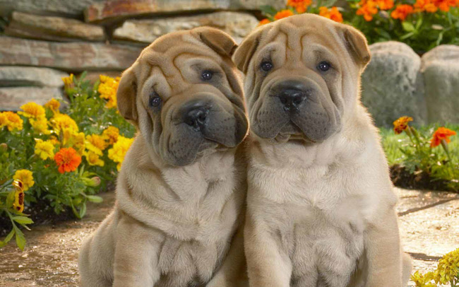 Seguros para perros: ¿son obligatorios?