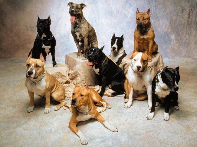 perros-razas-peligrosas