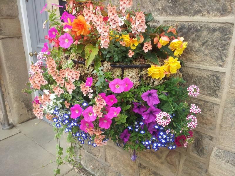 Plantas resistentes ideales para cultivar en verano