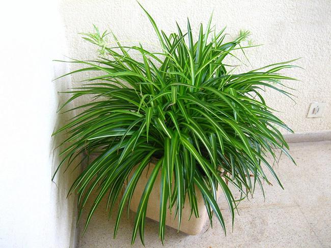 5 plantas con alta capacidad de purificar el aire de tu - Cinta planta ...