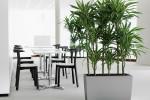 plantas-de-interior-purificadoras