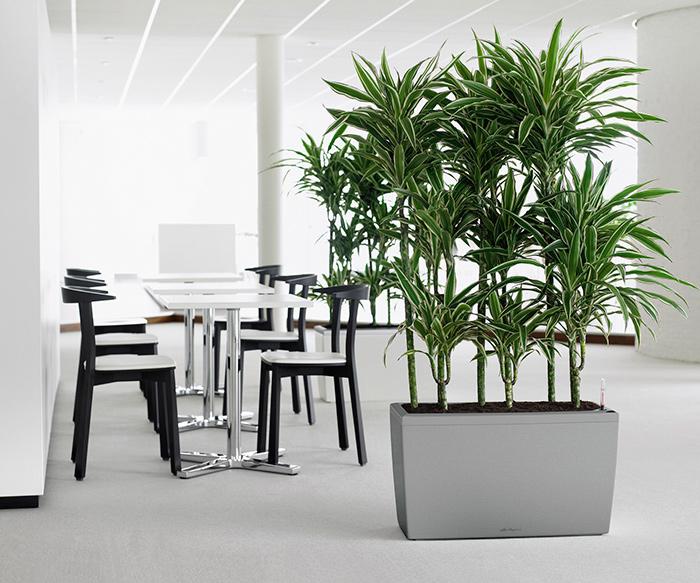 5 plantas con alta capacidad de purificar el aire de tu hogar u oficina.
