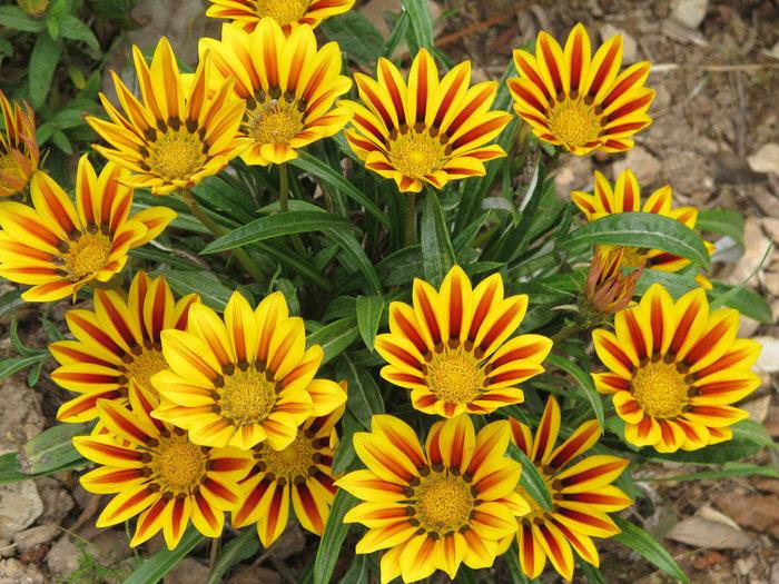 5 plantas tapizantes que benefician a tu jardín.