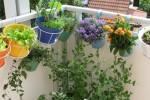 plantas-resistentes-al-viento