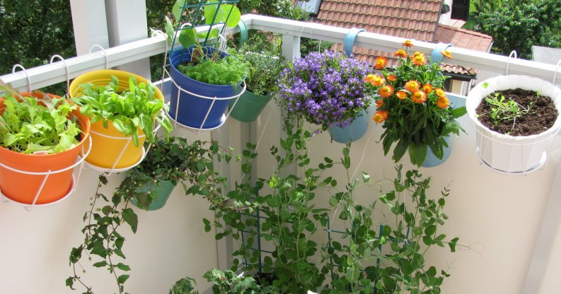 Cómo proteger tus plantas y jardín del viento