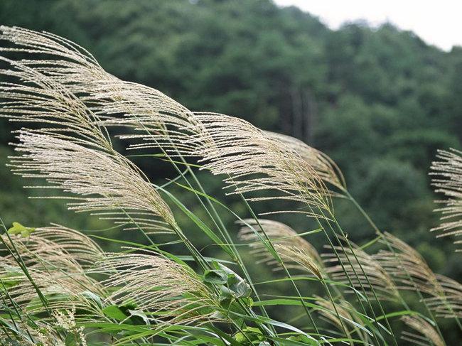 C mo proteger tus plantas y jard n del viento garden - Cortavientos de jardin ...